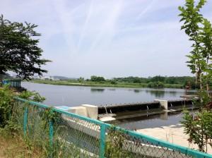バス釣り 多摩川