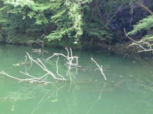 相模湖2014081