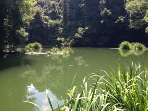 相模湖 8月 2015年06