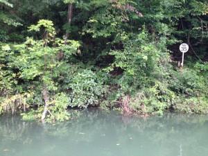 相模湖 バス釣り 8月3